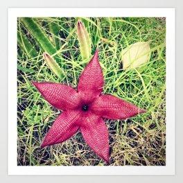 Carrion Flower Art Print