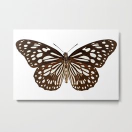 "Butterfly species Tirumala limniace ""Blue Tiger"" Metal Print"