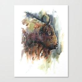 Bison. Canvas Print