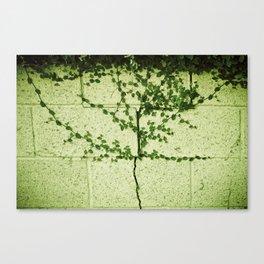 Ivy Wall Canvas Print