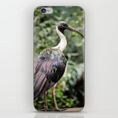 Bird of Colors iPhone Skin