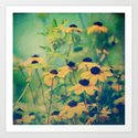 Summer Susans by joystclaire