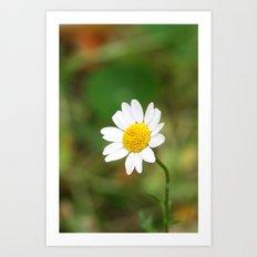 sweet daisy  Art Print