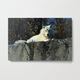Sentinel: Arctic Wolf Metal Print