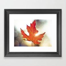 Leaf Falling in the Sky Framed Art Print