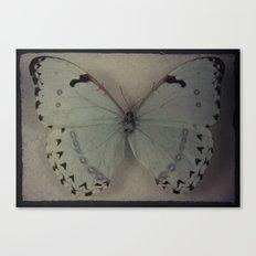 Papillon _ Vintage Flutter Canvas Print