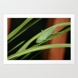 Bug 2 Art Print