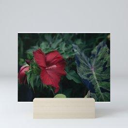 Garden Hibiscus Mini Art Print