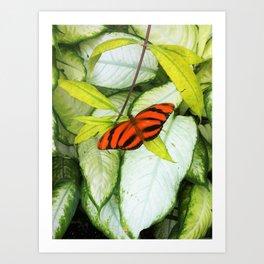 Tigerfly Art Print