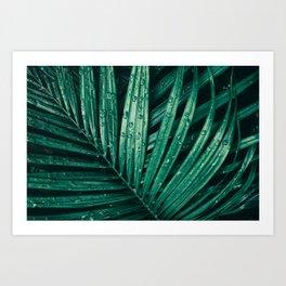Water Rain drop on tropical palm leaf, dark green foliage background Art Print