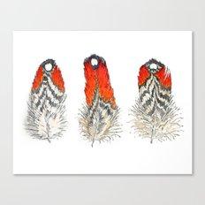 Satyr Tragopan Feathers Canvas Print