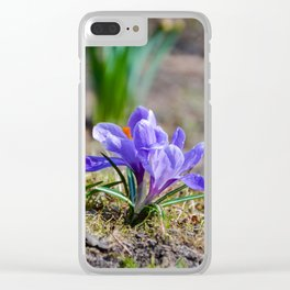 Springtime Crocus in Warsaw Clear iPhone Case