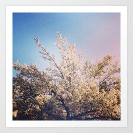 Blossoms. Art Print
