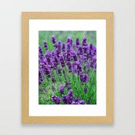 Lavender colors... Framed Art Print