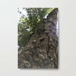 Mighty Hemlock Metal Print