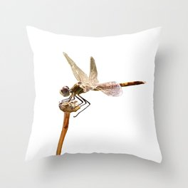 Dragonfly Resting On Seed Head Isolated Throw Pillow