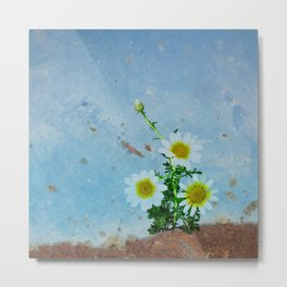 Daisies on rusty metal Metal Print