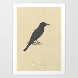 Bird  by Pieter van Oort 8 Art Print