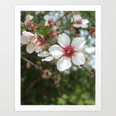 Blossom Flower Art Print
