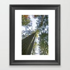 tree tops in canada Framed Art Print