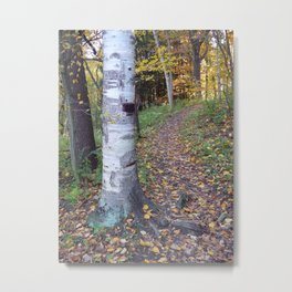 Birch Tree Trail Metal Print