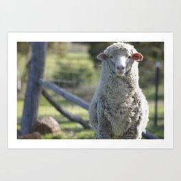 Sweet Patrick @ Happy Hooves Farm Sanctuary Australia Art Print