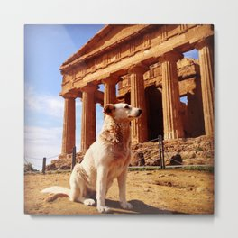Majestic Dog for a Majestic View Metal Print
