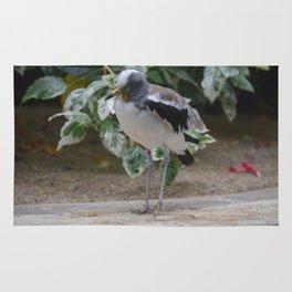 National Aviary - Pittsburgh - White Headed Wattled Lapwing Rug