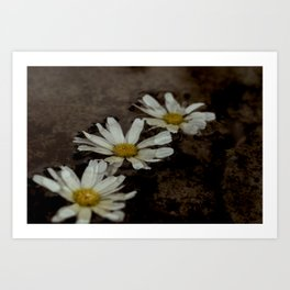 The Three Flowers Art Print