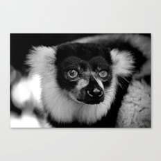 Curious Lemur Canvas Print