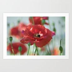 Red poppy Art Art Print