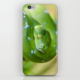 Green snake iPhone Skin