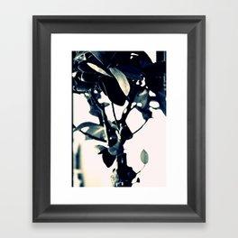 ginseng ficus Framed Art Print