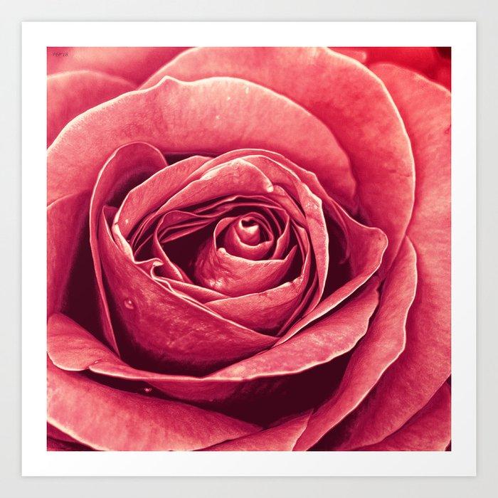 Petals of A Rose Art Print
