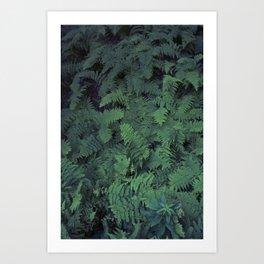 Fern Leaf Pattern Art Print