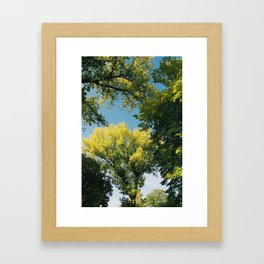 Tree branches in autumn Framed Art Print