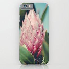 King Protea Protea cynaroides Sugar Bush iPhone Case