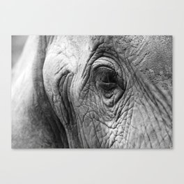 Gentle eyes Canvas Print