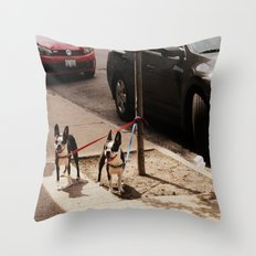 Boston Terriers ~ amped up for action! Throw Pillow