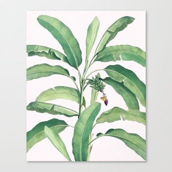 Banana leaves VI Canvas Print