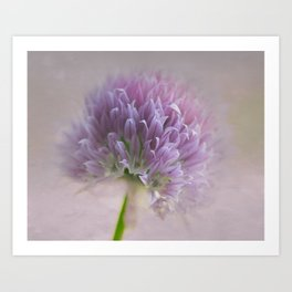 Chive Blossom Too Art Print