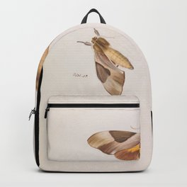 Arthur Bartholomew - Double Headed Hawk Moth, Coequosa triangularis (1862) Backpack