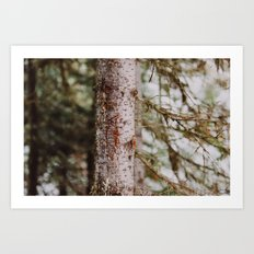 Grizzly Bear Was Here Art Print