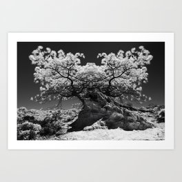 Conjoined Torrey Pines in Infrared Art Print