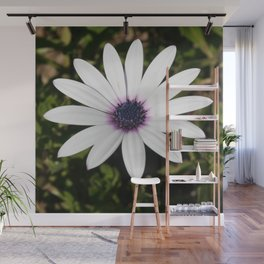 White African Daisy Wall Mural
