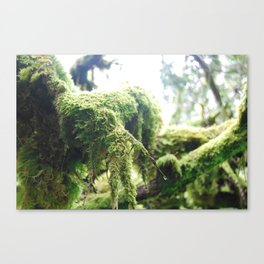 Scottish Moss Canvas Print