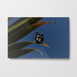 Common wanderer Metal Print