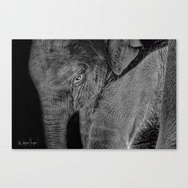 Big Baby Canvas Print