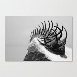 Comura Trilobite Canvas Print