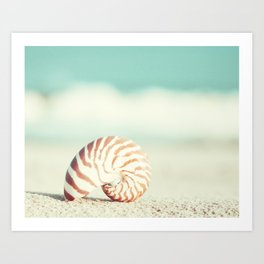 Seashell Beach Photography, Shell Coastal Ocean, Teal Turquoise Aqua Art, Nautilus Seaside Photo Art Print